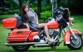 Картинка девушка, мотоцикл, Harley