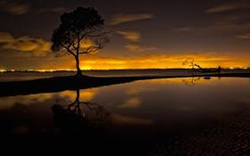 Обои звезды, ночь, озеро, дерево