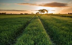 Картинка поле, природа, восход, утро
