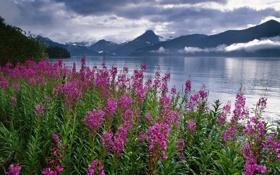 Картинка небо, облака, цветы, горы, природа, озеро, Аляска