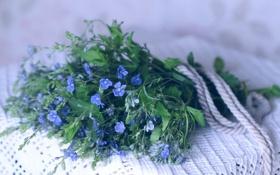 Обои цветы, букет, синие