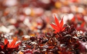 Обои листья, блики, размытость, опавшие, осенние
