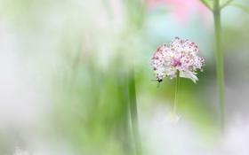 Картинка капли, цветок, роса, растение, насекомое, боке