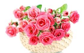 Обои цветы, розы, розовые, pink, bouquet, roses, basket