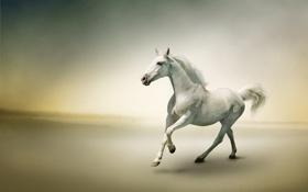 Картинка туман, река, лошадь, бег
