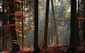 Обои осень, лес, свет, деревья, стволы, листва