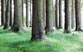 Обои деревья, природа, фото, дерево