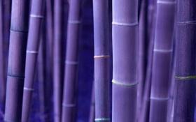 Обои стволы, вельвет, бамбук