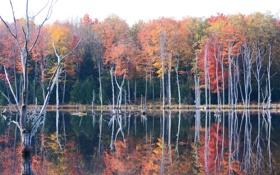 Картинка осень, лес, небо, деревья, озеро, пруд, дымка
