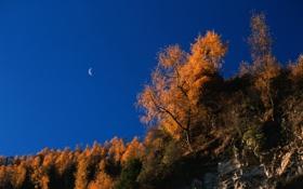 Обои autumn, осень, скалы