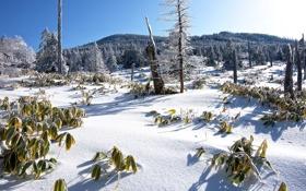Обои зима, иней, трава, снег, деревья, горы