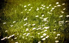 Обои поле, цветы, природа, фото, обои