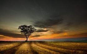 Картинка поле, небо, закат, дерево