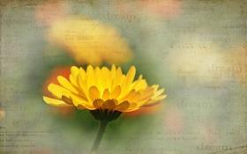 Картинка цветок, фон, лето, стиль