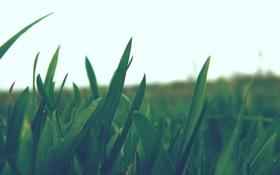 Картинка небо, макро, природа, фото, растения, колоски, колосья