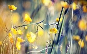 Обои поле, цветок, макро, поляна, растение, стебель, vibrant life