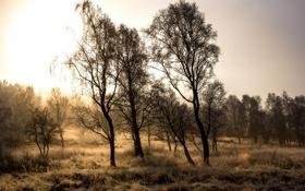 Картинка поле, осень, деревья, природа
