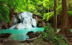 Обои лес, природа, река, водопад, красота, forest, river