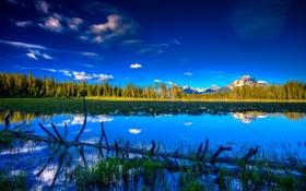 Обои лес, небо, озеро, дерево