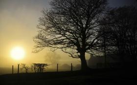 Картинка туманы, дымка, дерево, заборы, природа, пейзажи, свет