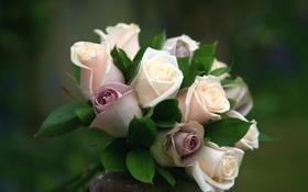 Обои букет, розы, цветы