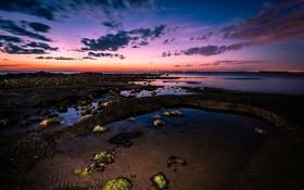 Обои камни, закат. сумерки, залив, водоросли