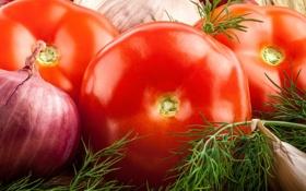 Обои лук, укроп, овощи, помидор, чеснок, cabbage, tomato