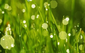 Картинка зелень, трава, капли, роса, грани, боке
