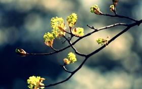 Обои цветы, природа, ветка, цветение, nature, blossom, flowers