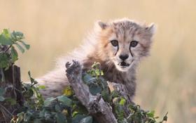 Картинка кошка, морда, листья, гепард, детёныш, котёнок
