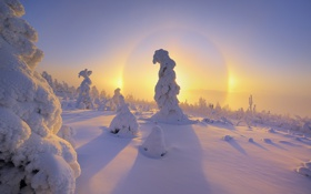 Картинка зима, снег, рассвет, елки
