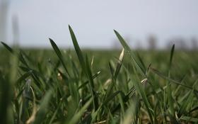 Обои весна, зелень, трава