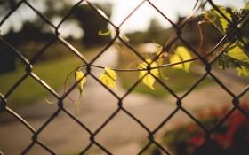 Обои листья, веточка, забор, ветка, ограда