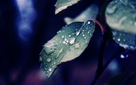 Картинка капли, макро, природа, лист, роса, фото, обои