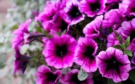 Обои лето, макро, цветы