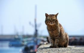 Картинка кошка, фон, пристань