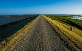 Картинка дорога, пейзаж, овцы