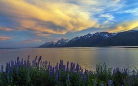 Обои Grand Teton, Jackson Lake, Sunset