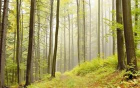 Обои лес, трава, деревья