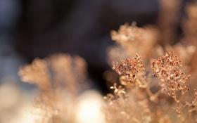 Картинка макро, растение, ветка