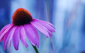 Обои цветок, макро, сиреневый, фокус