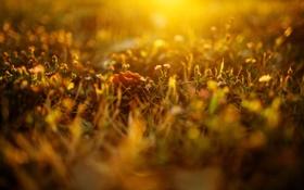 Обои трава, фото, цвета, макросъемка, растения, природа, свет