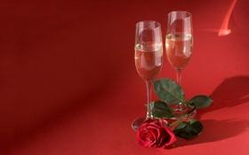 Обои цветы, вина, розы, красные