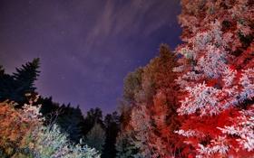 Картинка небо, звезды, свет, деревья, ночь, краски
