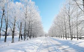 Обои зима, дорога, лес, снег, деревья, даль