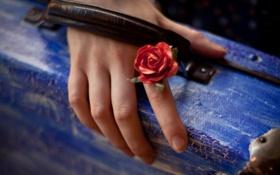 Картинка цветок, макро, рука, чемодан