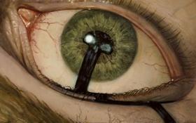Обои глаз, смерть, череп, Magic The Gathering, MTG, метка, Deathmark