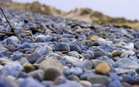 Обои ветки, камни, берег, фокус, камушки
