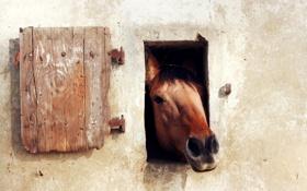 Обои стена, окно, конь