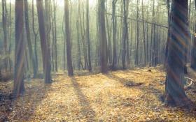 Картинка лес, лучи, свет, природа, листва, радуга